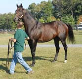 A Maryland-bred race horse